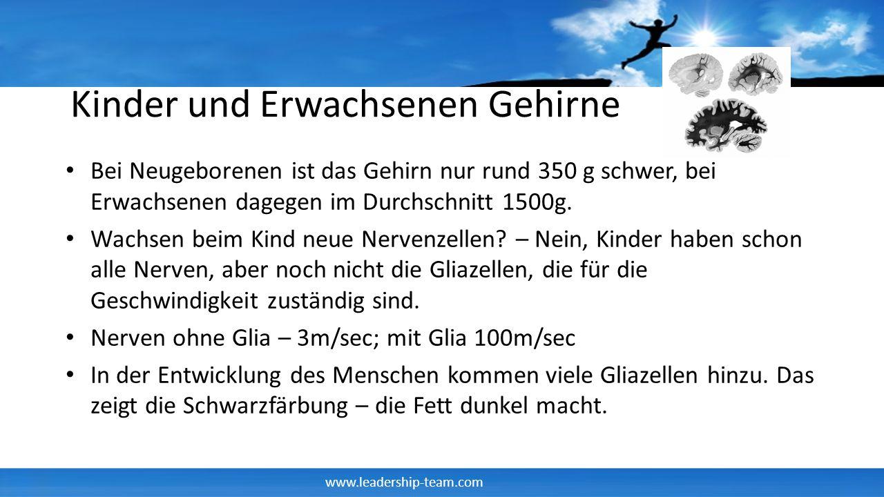 www.leadership-team.com Gliazellen im Laufe der Entwicklung