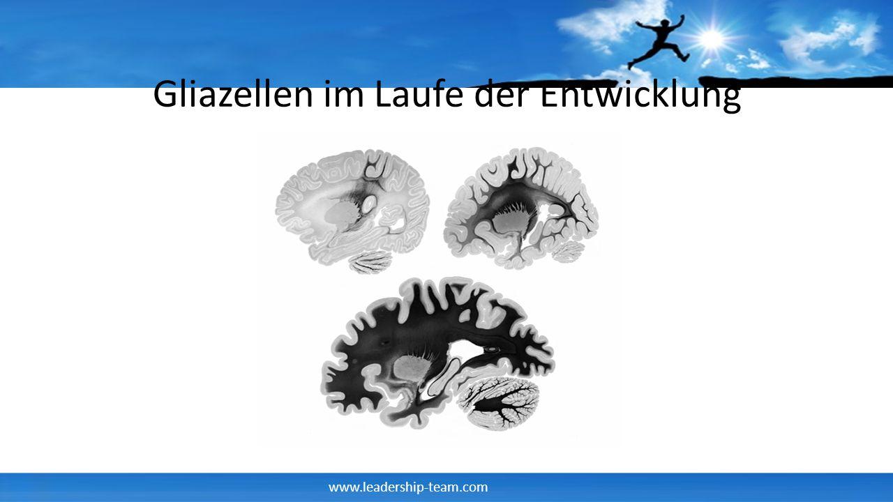 www.leadership-team.com Die Struktur des Gehirns Brodmann Areale Hemisphären Links Rechts Korbidian Brodman hat durch Nissl Färbung 43 unterschiedliche Regionen des Gehirns unterscheiden können