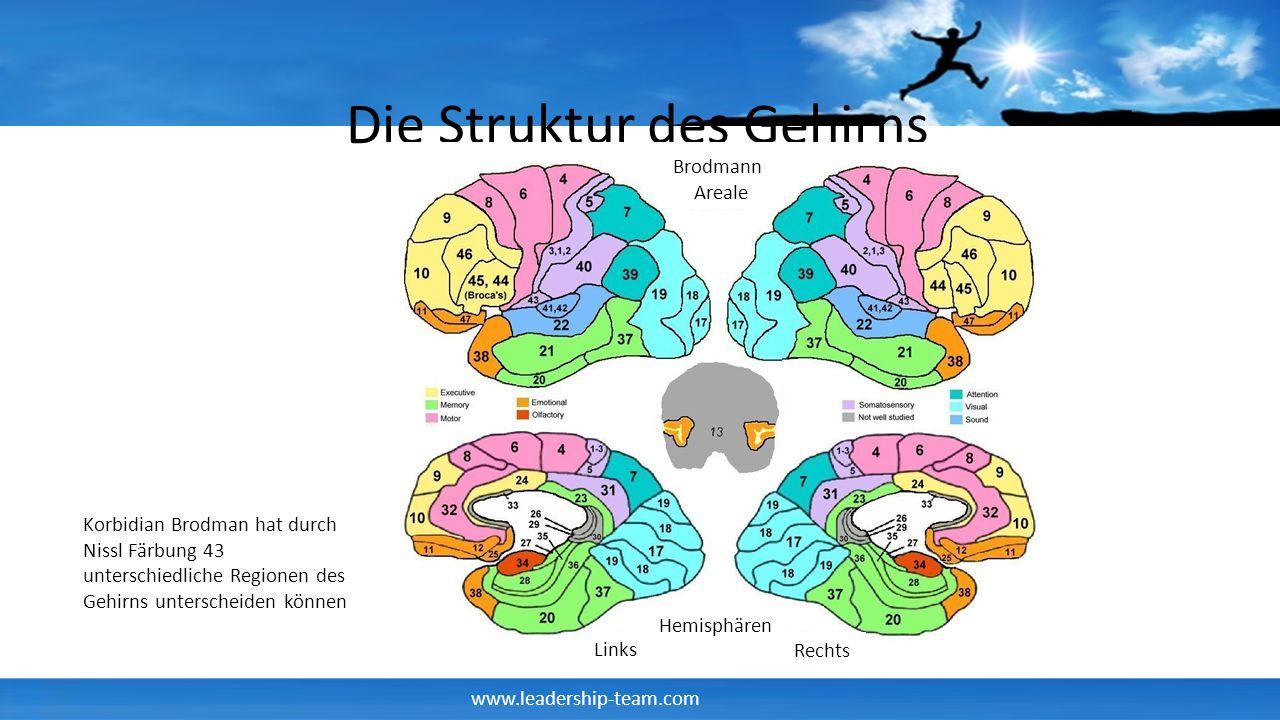 www.leadership-team.com Die Struktur des Gehirns Brodmann Areale Hemisphären Links Rechts Korbidian Brodman hat durch Nissl Färbung 43 unterschiedlich