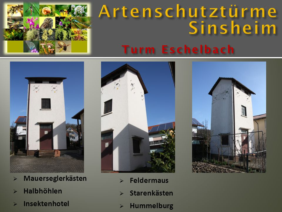  Mauerseglerkästen  Halbhöhlen  Insektenhotel Turm Eschelbach  Feldermaus  Starenkästen  Hummelburg