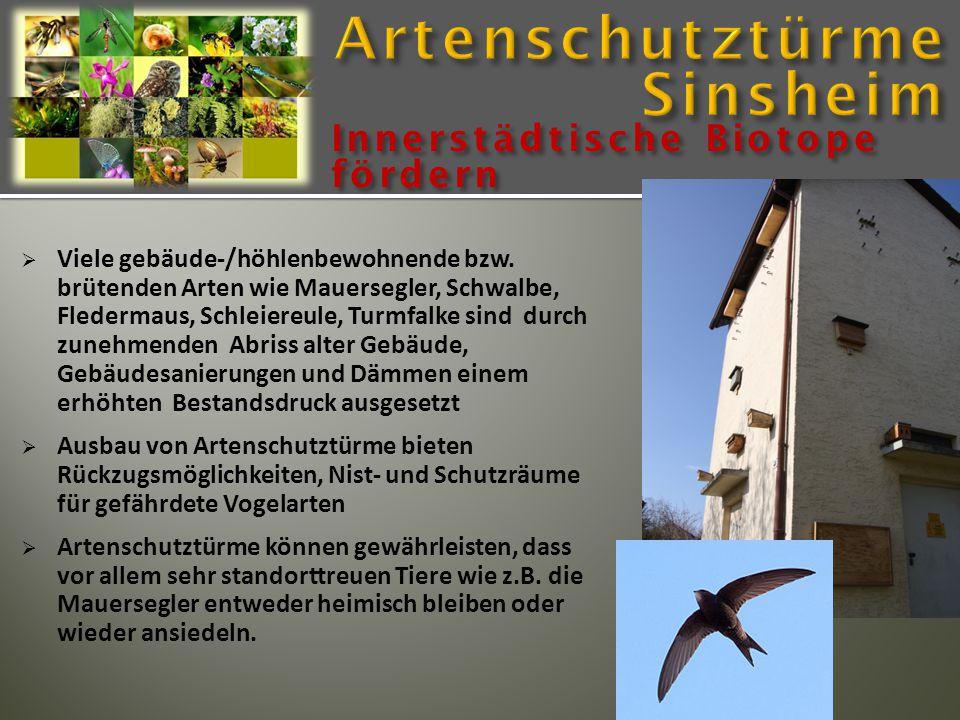 Viele gebäude-/höhlenbewohnende bzw. brütenden Arten wie Mauersegler, Schwalbe, Fledermaus, Schleiereule, Turmfalke sind durch zunehmenden Abriss al