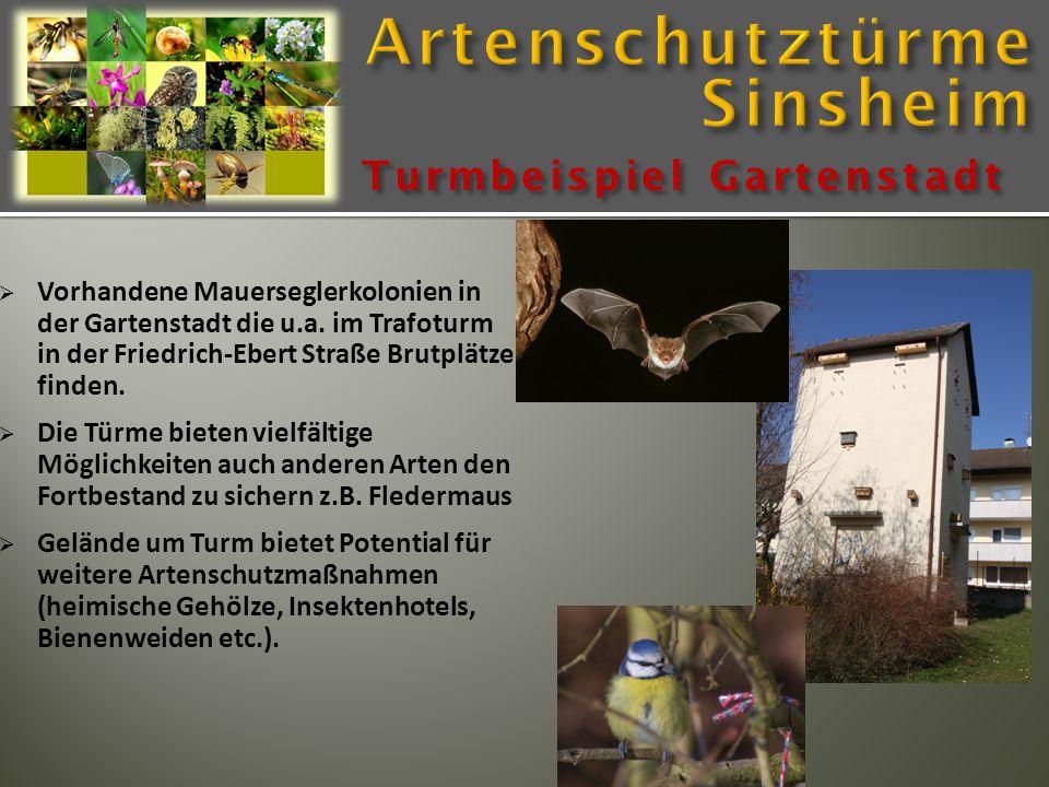  Vorhandene Mauerseglerkolonien in der Gartenstadt die u.a. im Trafoturm in der Friedrich-Ebert Straße Brutplätze finden.  Die Türme bieten vielfält