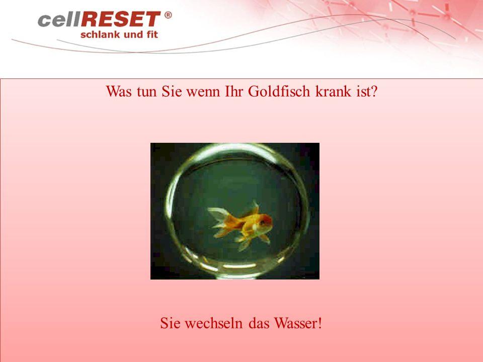 Was tun Sie wenn Ihr Goldfisch krank ist? Sie wechseln das Wasser! Was tun Sie wenn Ihr Goldfisch krank ist? Sie wechseln das Wasser!
