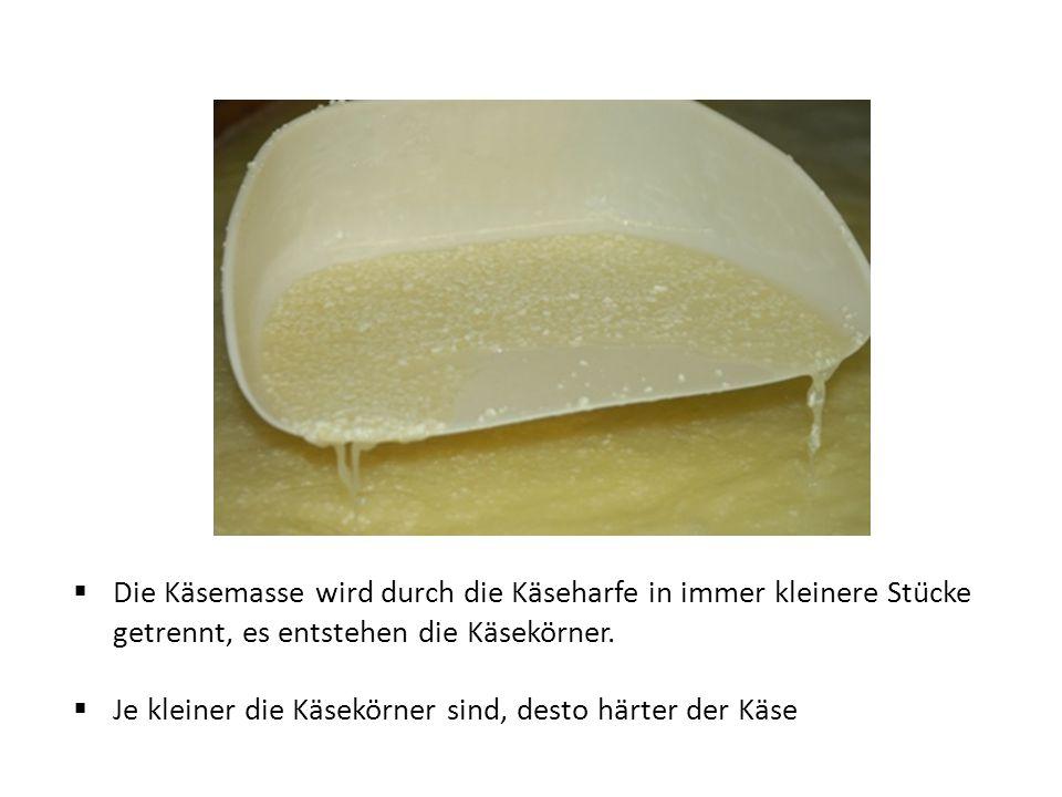  Die Käsemasse wird durch die Käseharfe in immer kleinere Stücke getrennt, es entstehen die Käsekörner.  Je kleiner die Käsekörner sind, desto härt