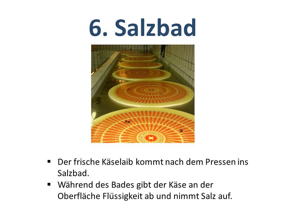  Der frische Käselaib kommt nach dem Pressen ins Salzbad.  Während des Bades gibt der Käse an der Oberfläche Flüssigkeit ab und nimmt Salz auf. 6.