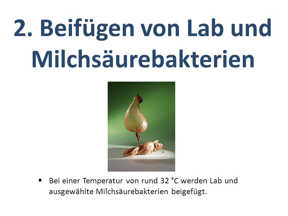 2. Beifügen von Lab und Milchsäurebakterien  Bei einer Temperatur von rund 32 °C werden Lab und ausgewählte Milchsäurebakterien beigefügt.