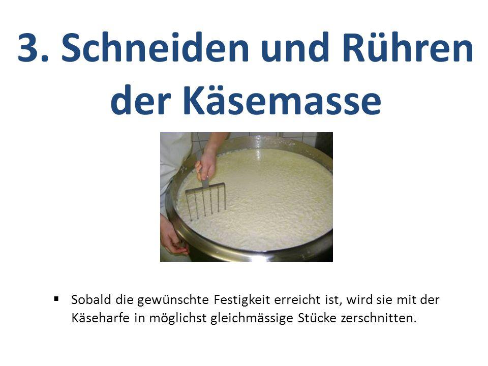  Sobald die gewünschte Festigkeit erreicht ist, wird sie mit der Käseharfe in möglichst gleichmässige Stücke zerschnitten. 3. Schneiden und Rühren