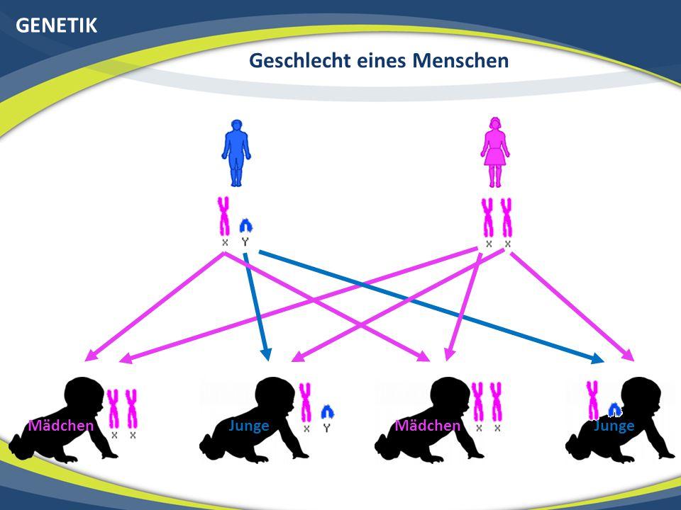 GENETIK HLA-B Gen Vererbung von Mutationen