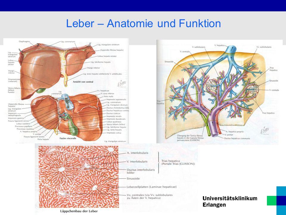 Ungewöhnlich Anatomie Und Funktion Der Leber Galerie - Anatomie ...