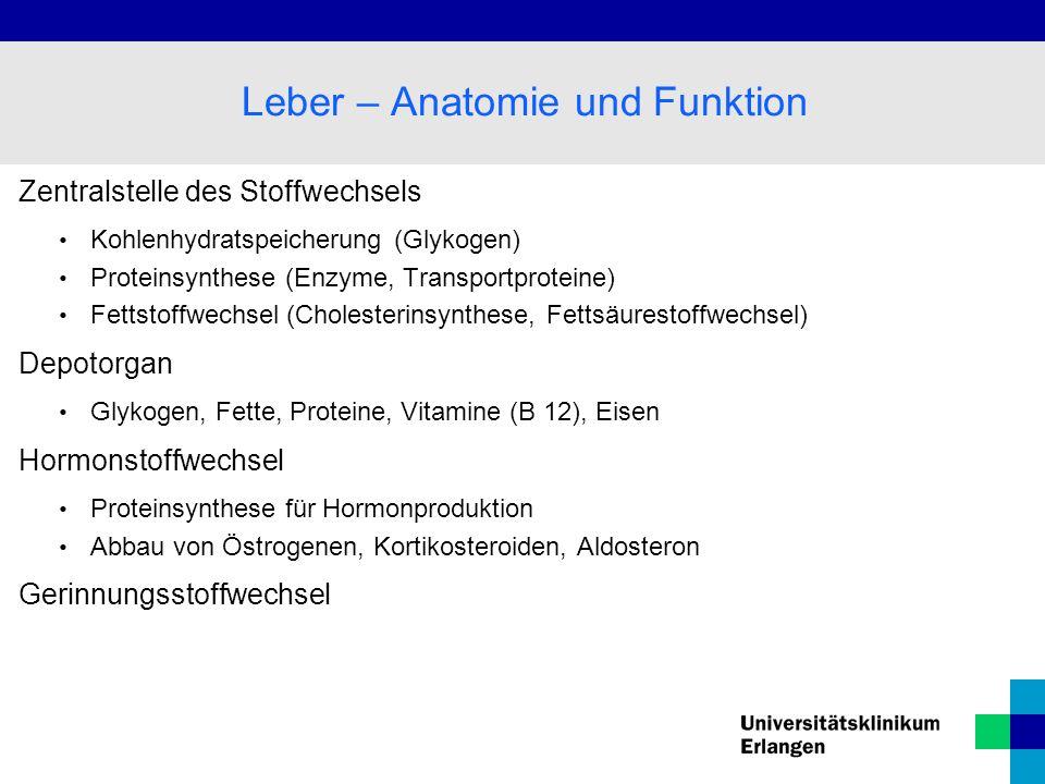 Zentralstelle des Stoffwechsels Kohlenhydratspeicherung (Glykogen) Proteinsynthese (Enzyme, Transportproteine) Fettstoffwechsel (Cholesterinsynthese,