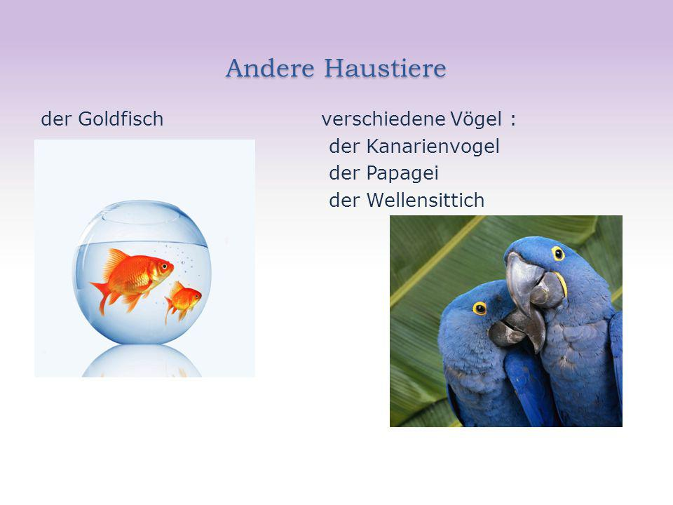 Andere Haustiere der Goldfisch verschiedene Vögel : der Kanarienvogel der Papagei der Wellensittich