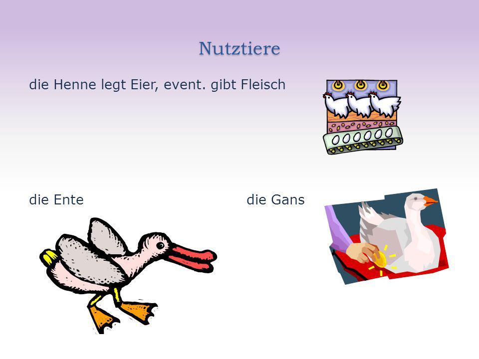 Nutztiere die Henne legt Eier, event. gibt Fleisch die Ente die Gans