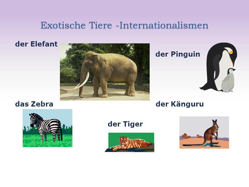 Exotische Tiere -Internationalismen der Elefant der Pinguin das Zebra der Känguru der Tiger