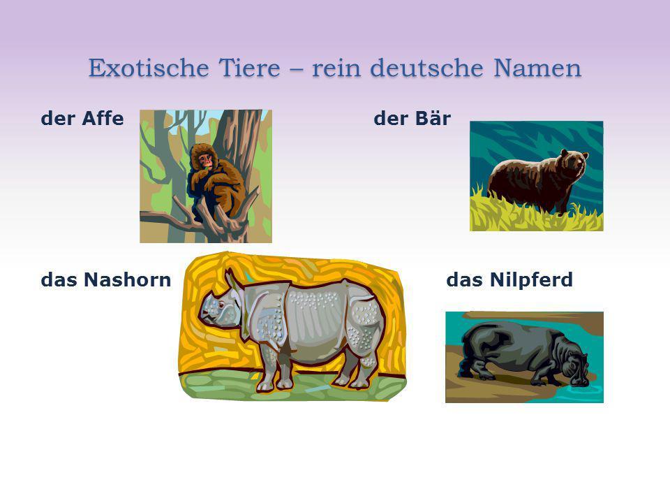 Exotische Tiere – rein deutsche Namen der Affe der Bär das Nashorn das Nilpferd