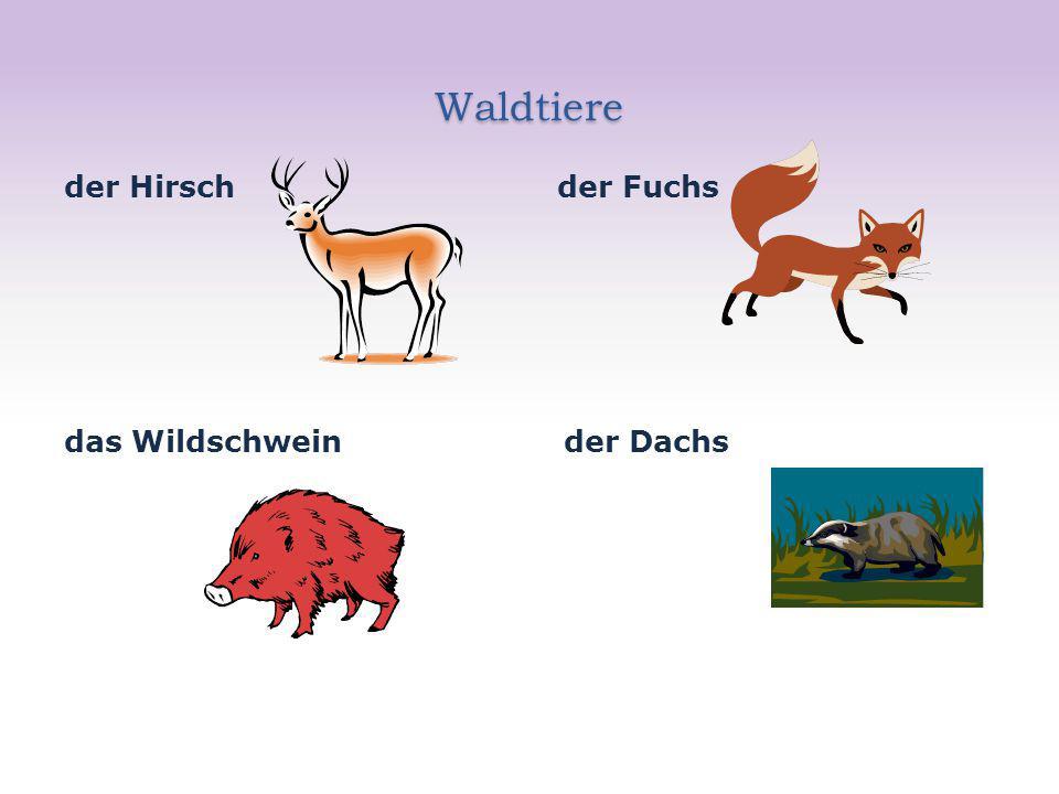 Waldtiere der Hirsch der Fuchs das Wildschwein der Dachs