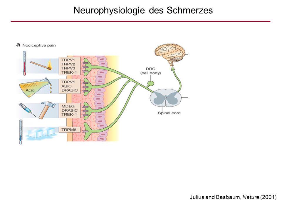 Neurophysiologie des Schmerzes Julius and Basbaum, Nature (2001)