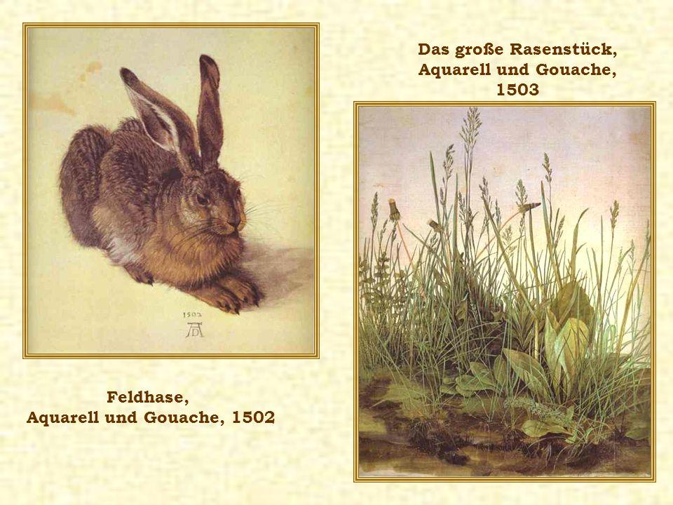 Feldhase, Aquarell und Gouache, 1502 Das große Rasenstück, Aquarell und Gouache, 1503