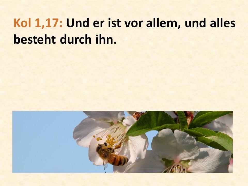 Kol 1,17: Und er ist vor allem, und alles besteht durch ihn.