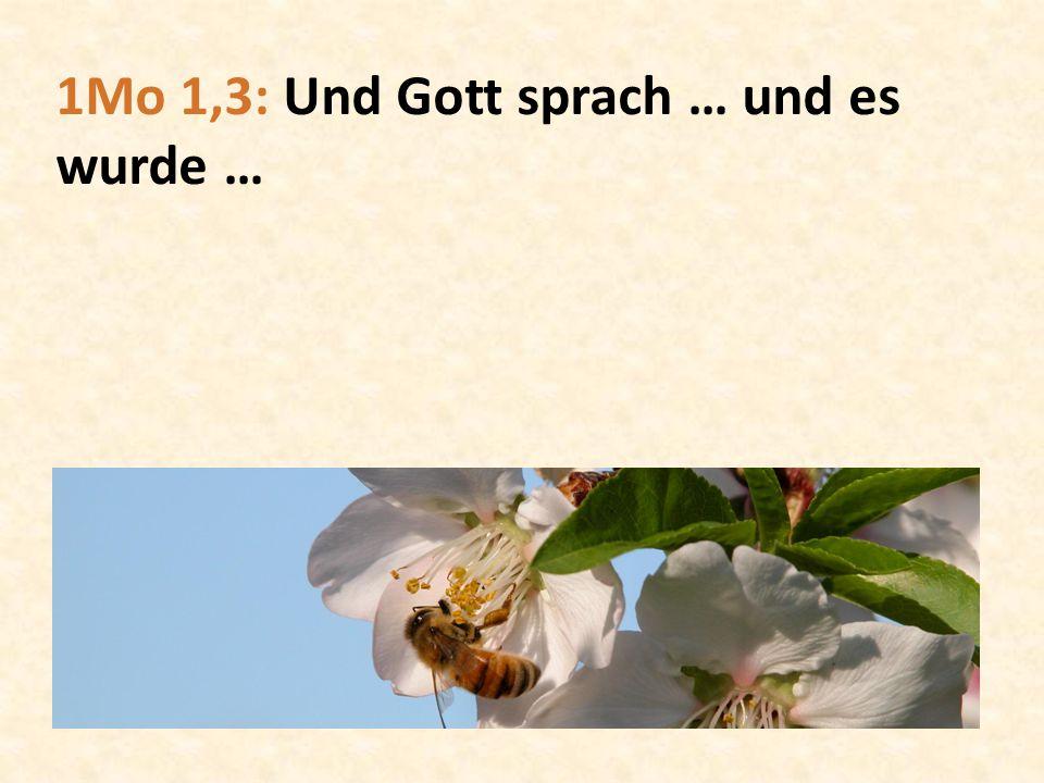 1Mo 1,3: Und Gott sprach … und es wurde …
