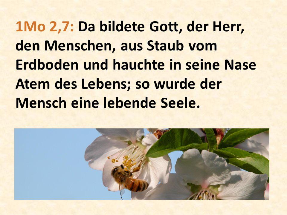 1Mo 2,7: Da bildete Gott, der Herr, den Menschen, aus Staub vom Erdboden und hauchte in seine Nase Atem des Lebens; so wurde der Mensch eine lebende S