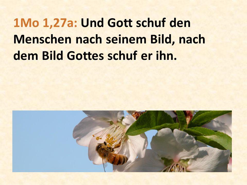 1Mo 1,27a: Und Gott schuf den Menschen nach seinem Bild, nach dem Bild Gottes schuf er ihn.