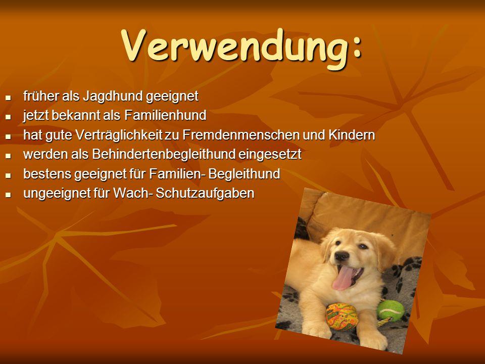 Verwendung: früher als Jagdhund geeignet früher als Jagdhund geeignet jetzt bekannt als Familienhund jetzt bekannt als Familienhund hat gute Verträgli