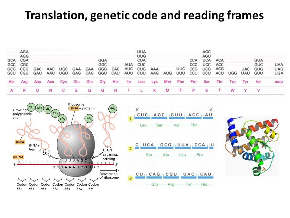 Translation, genetic code and reading frames