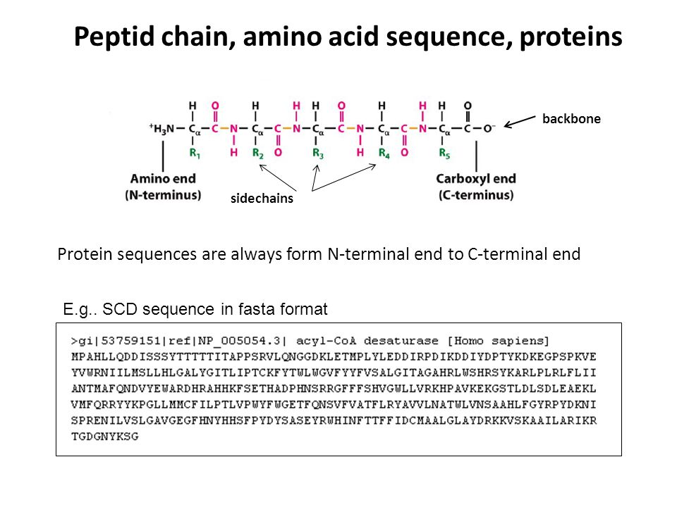 Peptid chain, amino acid sequence, proteins Protein sequences are always form N-terminal end to C-terminal end backbone sidechains E.g.. SCD sequence
