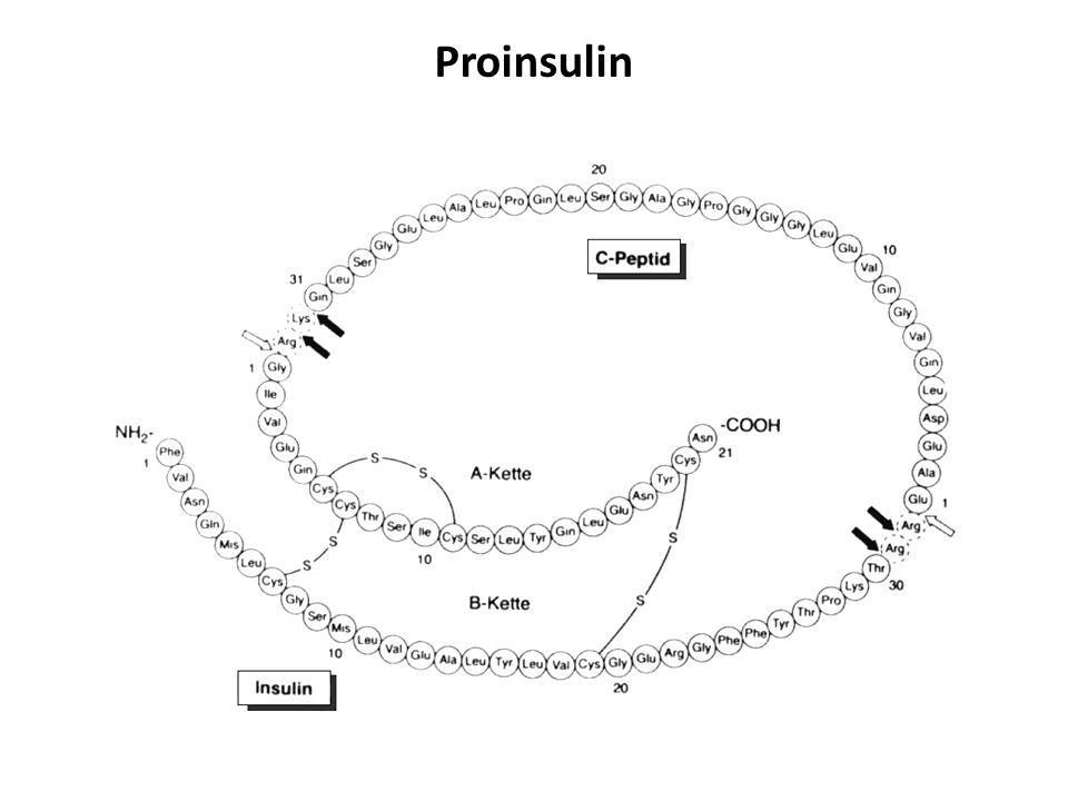 Proinsulin