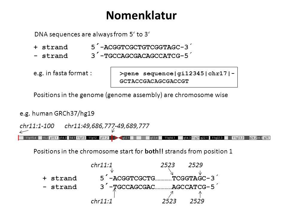 + strand5´-ACGGTCGCTGTCGGTAGC-3´ - strand3´-TGCCAGCGACAGCCATCG-5 ´ e.g. in fasta format : >gene sequence|gi12345|chr17|- GCTACCGACAGCGACCGT DNA sequen