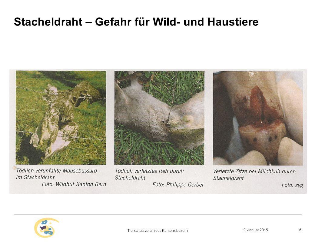 Stacheldraht – Gefahr für Wild- und Haustiere 9. Januar 2015 Tierschutzverein des Kantons Luzern 6