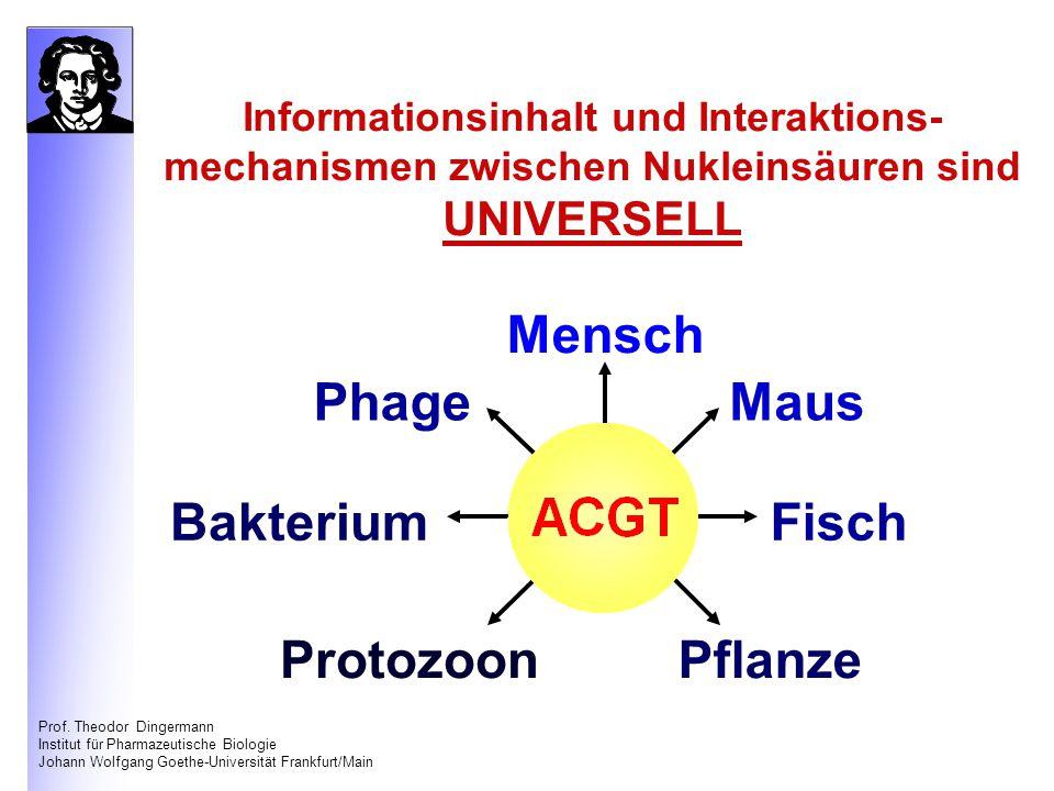 Prof. Theodor Dingermann Institut für Pharmazeutische Biologie Johann Wolfgang Goethe-Universität Frankfurt/Main Informationsinhalt und Interaktions-