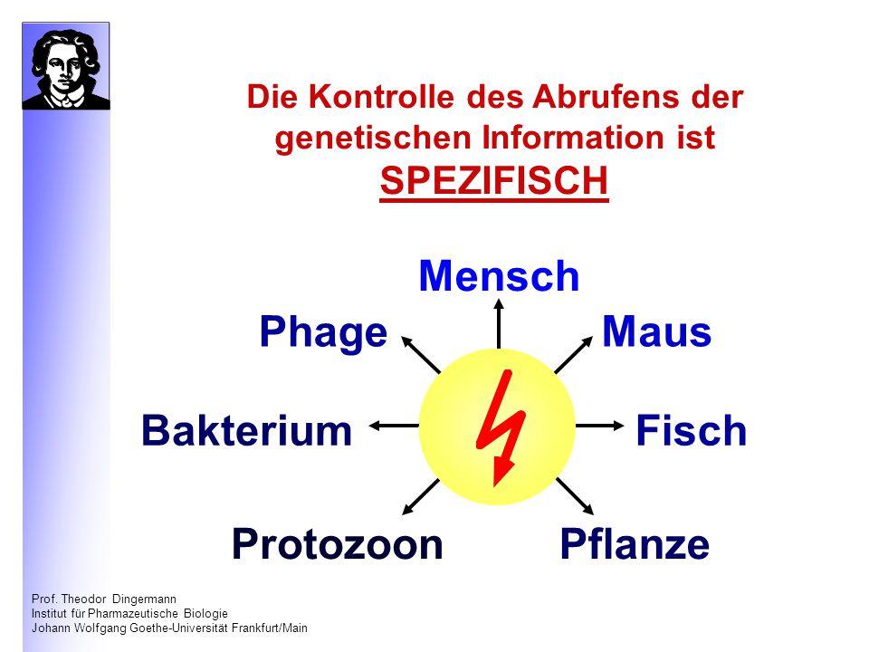 Prof. Theodor Dingermann Institut für Pharmazeutische Biologie Johann Wolfgang Goethe-Universität Frankfurt/Main Die Kontrolle des Abrufens der geneti