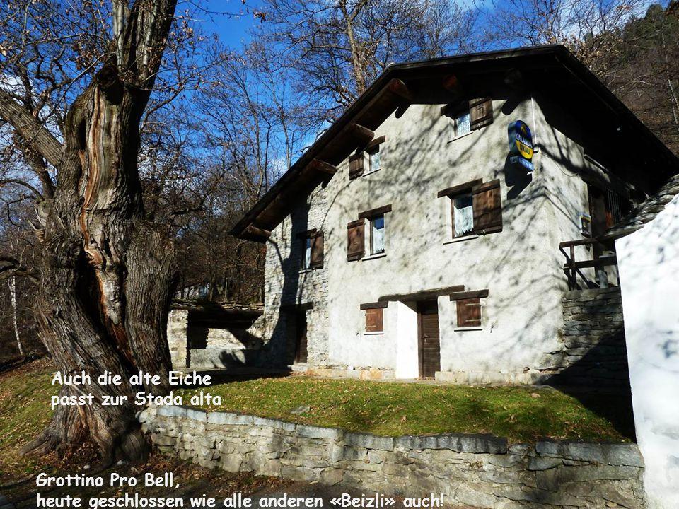 Auch die alte Eiche passt zur Stada alta Grottino Pro Bell, heute geschlossen wie alle anderen «Beizli» auch!