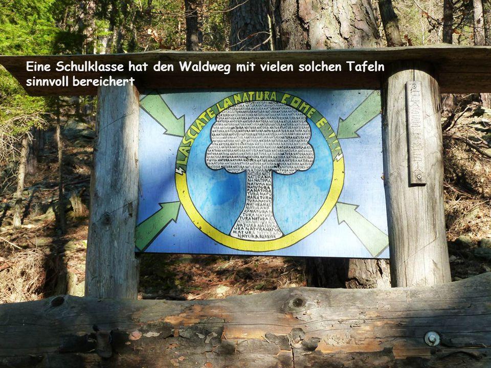 Eine Schulklasse hat den Waldweg mit vielen solchen Tafeln sinnvoll bereichert
