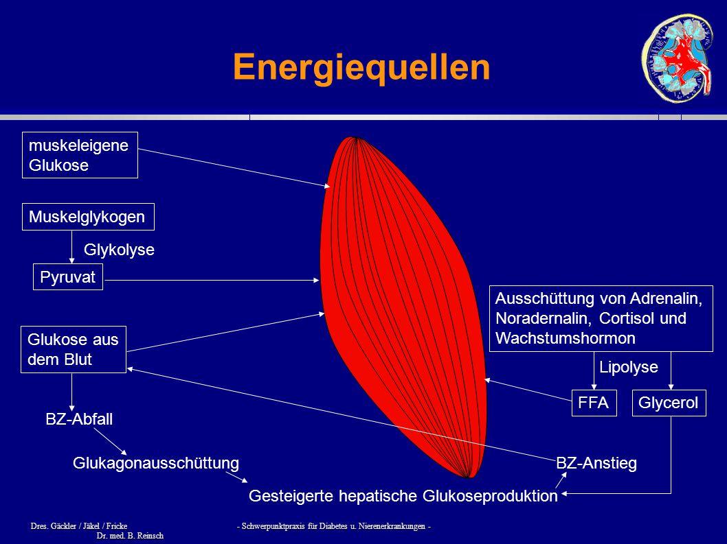 Dres. Gäckler / Jäkel / Fricke - Schwerpunktpraxis für Diabetes u. Nierenerkrankungen - Dr. med. B. Reinsch Energiequellen muskeleigene Glukose Muskel