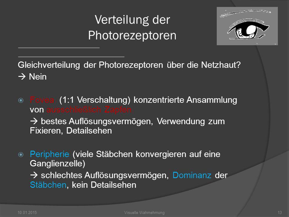 Gleichverteilung der Photorezeptoren über die Netzhaut.