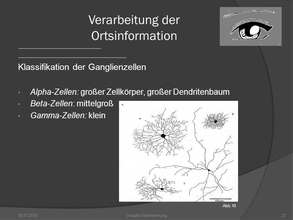 Klassifikation der Ganglienzellen Alpha-Zellen: großer Zellkörper, großer Dendritenbaum Beta-Zellen: mittelgroß Gamma-Zellen: klein 10.01.201521Visuelle Wahrnehmung Verarbeitung der Ortsinformation Abb.10