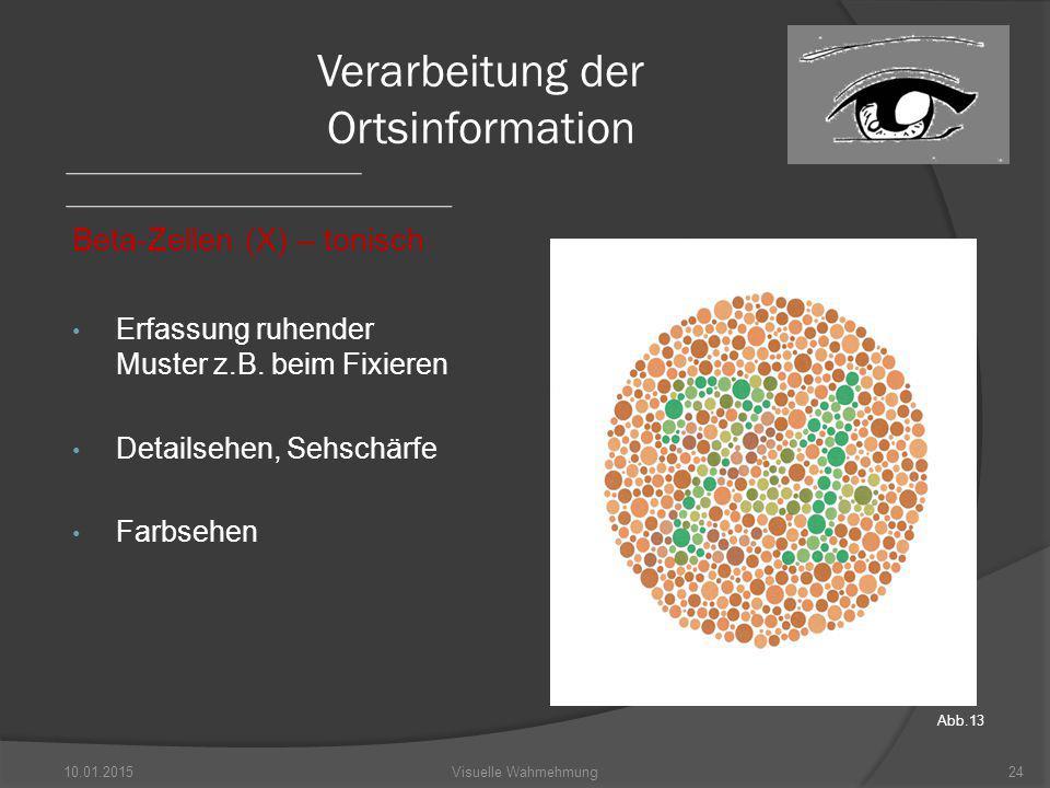 Verarbeitung der Ortsinformation Beta-Zellen (X) – tonisch Erfassung ruhender Muster z.B.