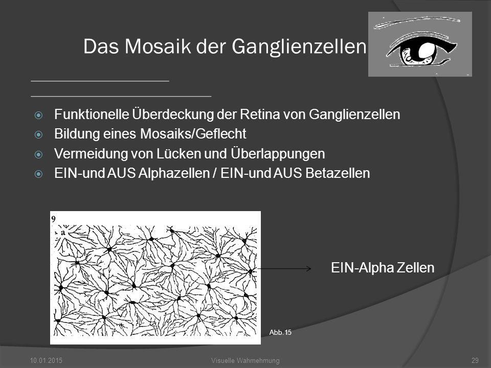  Funktionelle Überdeckung der Retina von Ganglienzellen  Bildung eines Mosaiks/Geflecht  Vermeidung von Lücken und Überlappungen  EIN-und AUS Alphazellen / EIN-und AUS Betazellen 10.01.201529Visuelle Wahrnehmung Das Mosaik der Ganglienzellen EIN-Alpha Zellen Abb.15