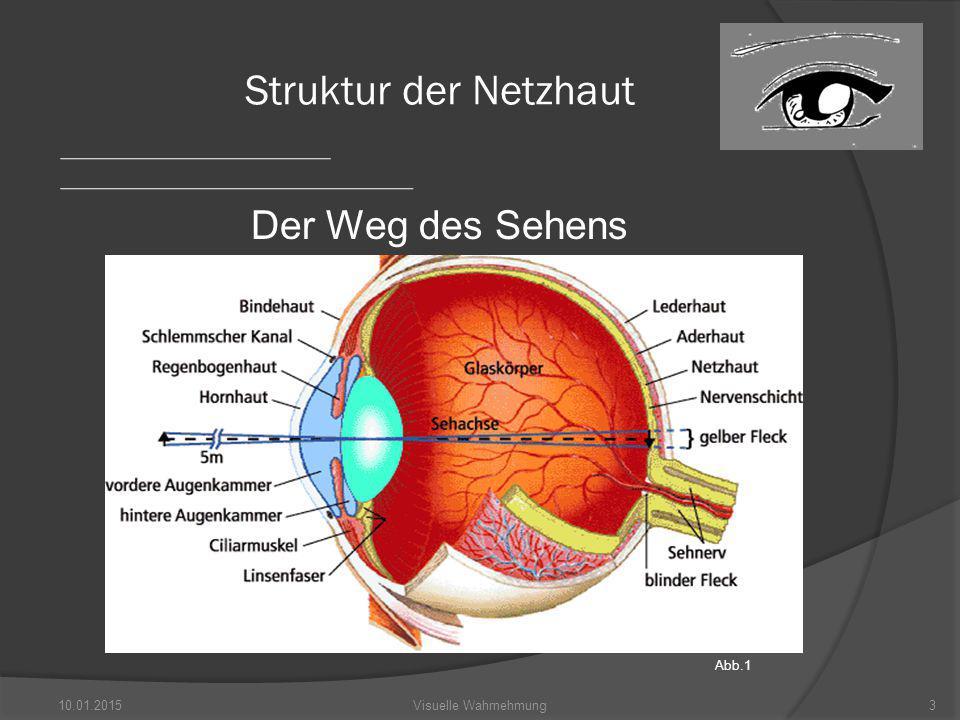 10.01.201514Visuelle Wahrnehmung Verteilung der Photorezeptoren FOVEA Blinder Fleck Abb. 5