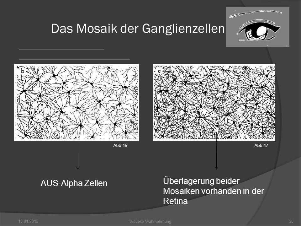 10.01.201530Visuelle Wahrnehmung Das Mosaik der Ganglienzellen AUS-Alpha Zellen Überlagerung beider Mosaiken vorhanden in der Retina Abb.16Abb.17