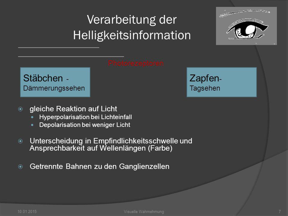 Photorezeptoren  gleiche Reaktion auf Licht Hyperpolarisation bei Lichteinfall Depolarisation bei weniger Licht  Unterscheidung in Empfindlichkeitsschwelle und Ansprechbarkeit auf Wellenlängen (Farbe)  Getrennte Bahnen zu den Ganglienzellen 10.01.20157Visuelle Wahrnehmung Verarbeitung der Helligkeitsinformation Stäbchen - Dämmerungssehen Zapfen - Tagsehen