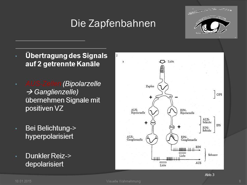 Die Zapfenbahnen Übertragung des Signals auf 2 getrennte Kanäle AUS-Zellen (Bipolarzelle  Ganglienzelle) übernehmen Signale mit positiven VZ Bei Belichtung-> hyperpolarisiert Dunkler Reiz-> depolarisiert 10.01.2015Visuelle Wahrnehmung8 Abb.3