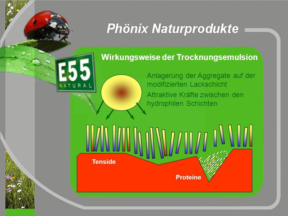 rein hydrophobe Moleküle (Wachs,...) hydrophil hydrophob Tensidhülle Struktur eines typischen Emulgatpartikels