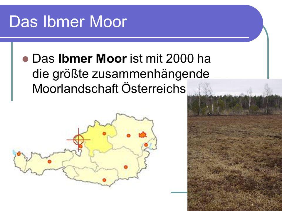 Das Ibmer Moor Das Ibmer Moor ist mit 2000 ha die größte zusammenhängende Moorlandschaft Österreichs