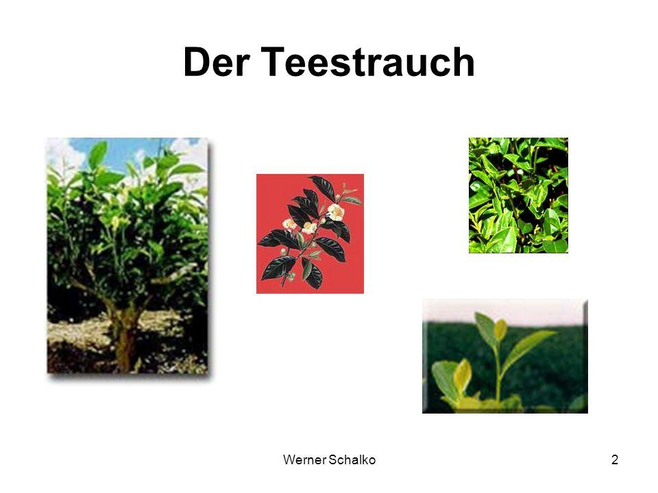 Werner Schalko13 Grüntee Viel Theanin Chlorophyll Mehr Polyphenole (Binden Coffein) Mehr Catechine (90 %) Schwarztee Oxidierte Polyphenole Kein Chlorophyll Enzymatische Aromabildung 4 – 5-fache Aromakonzentration