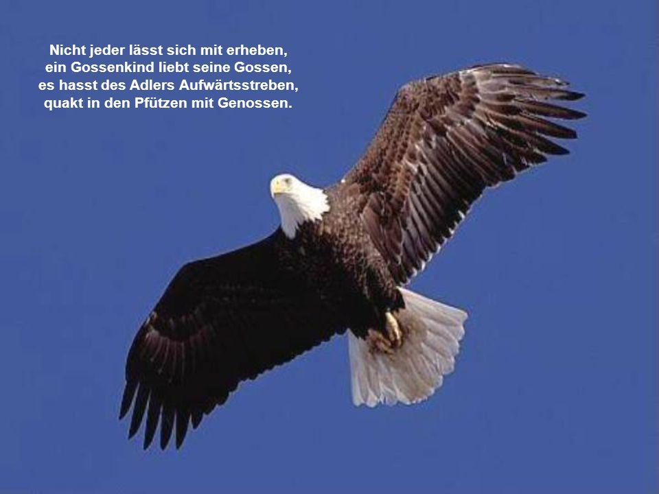 Nicht jeder lässt sich mit erheben, ein Gossenkind liebt seine Gossen, es hasst des Adlers Aufwärtsstreben, quakt in den Pfützen mit Genossen.