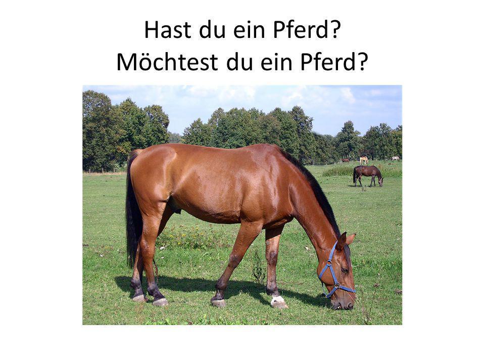 Hast du ein Pferd? Möchtest du ein Pferd?