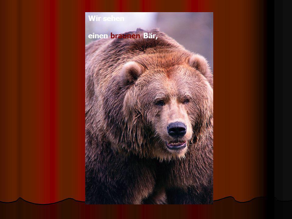 Wir sehen einen braunen Bär,